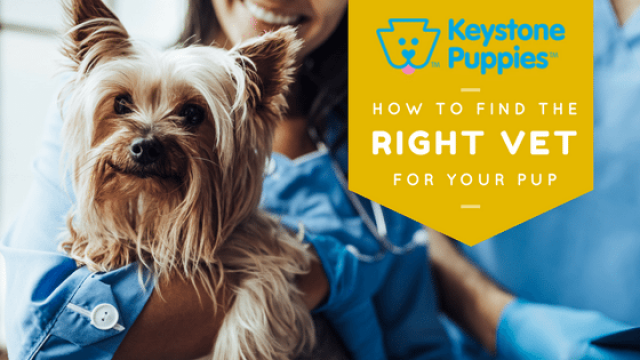 How to Find a Vet for Your New Puppy