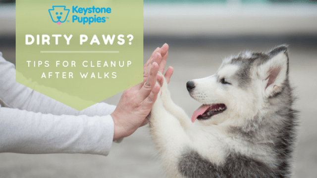 Muddy Paws: Tips for Paw Care After Walks