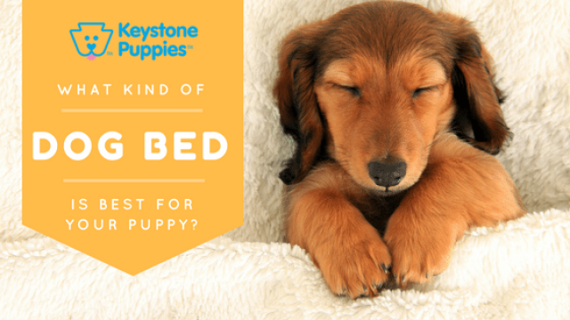 Which Dog Bed Should You Choose?