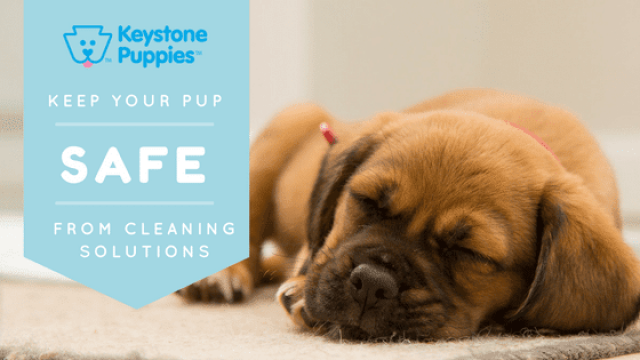 Spring Cleaning: Keep Your Pup Safe From Cleaning Solutions
