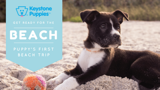 5 Beach Tips for Puppy Owners