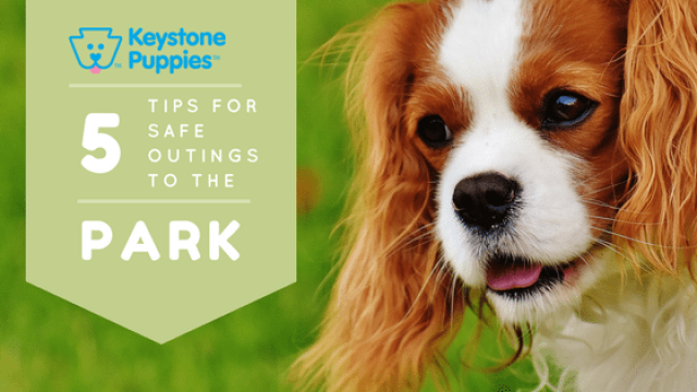 5 Tips for Safe Park Outings with Your Dog