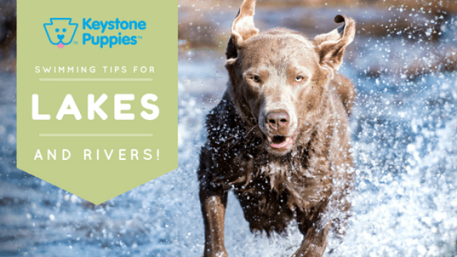 Swimming in Lakes and Rivers with Dogs