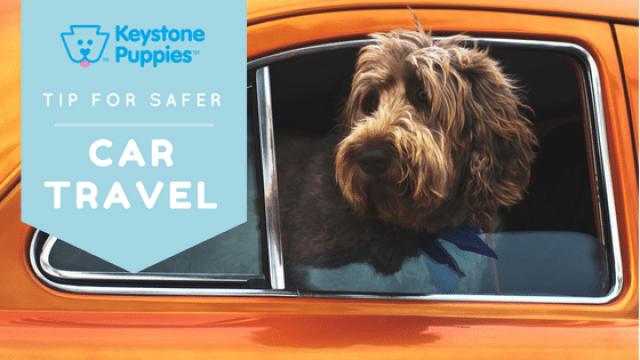 Safer Car Travel with Your Puppy