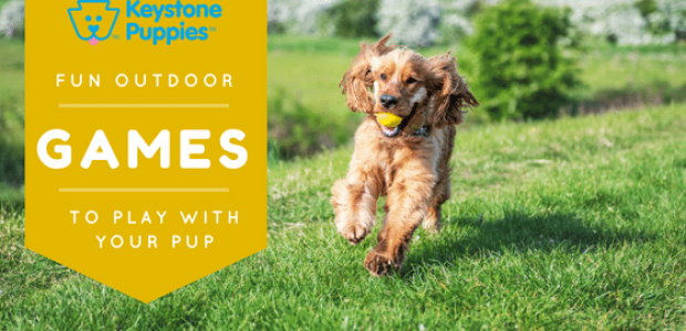 Outdoor Games You can Play With Your Puppy