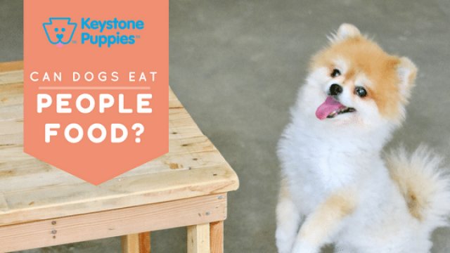Which People Foods are Okay for Dogs?