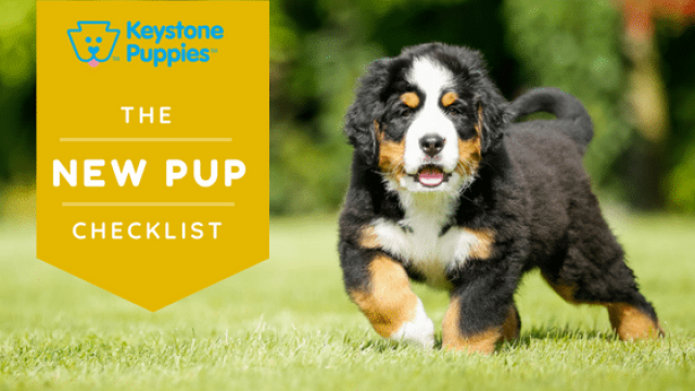 8 Things You Need for Your New Puppy