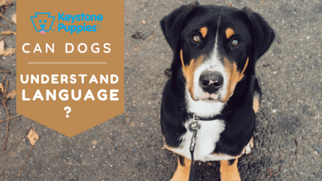 How Much Language do Dogs Actually Understand?