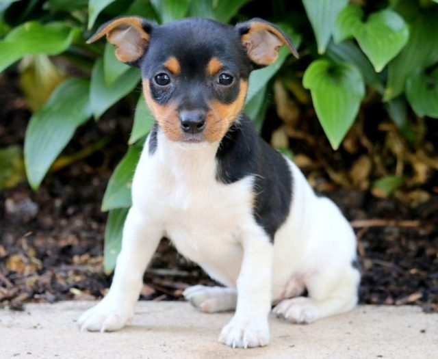 Puppies For Sale | Dogs for Adoption | Puppy Adoption Agency