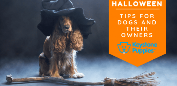 Halloween Tips for Dogs and Their Owners