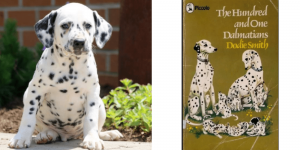 dalmation-pongo-healthy-responsibly-bred-Pennsylvania