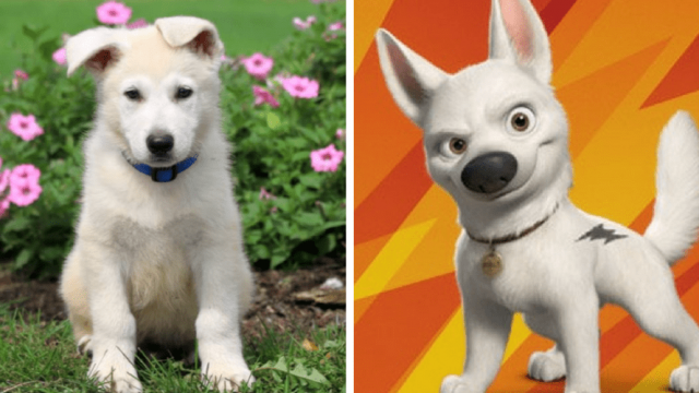 Are These Famous Dog Names Right for Your Puppy?