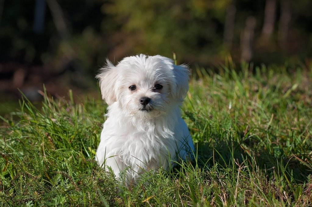 How to Help Stop Puppy Mills with Keystone Puppies