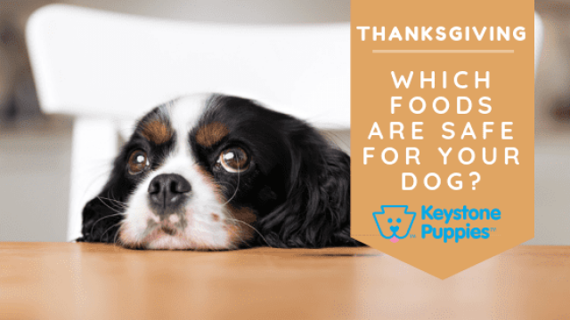 Thanksgiving Foods Your Dog Can Actually Eat