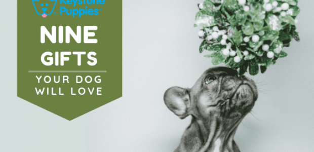 9 Holiday Gifts Your Puppy Will Actually Love