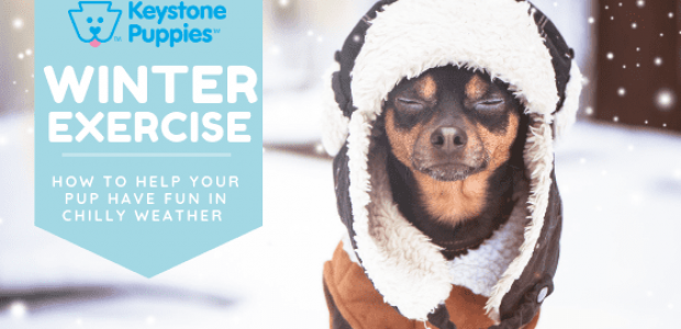 Tips for Exercising Your Puppy in Winter Weather