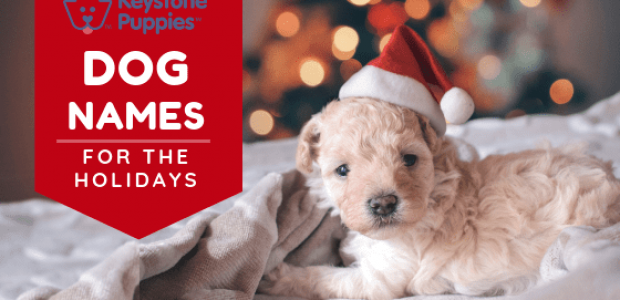 Holiday Dog Names for Your Pup