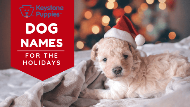 Uncategorized Archives Keystone Puppies