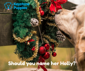 Holly-healthy-responsibly-bred-Pennsylvania
