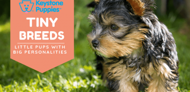 The Tiniest Dog Breeds