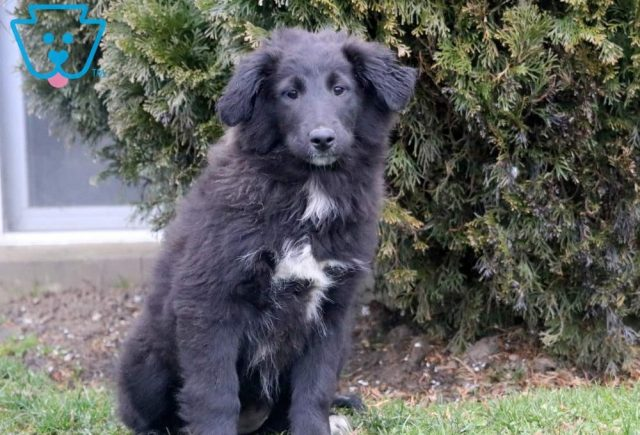 Willow-Golden-Retriever-Mixed-Breed-Dog