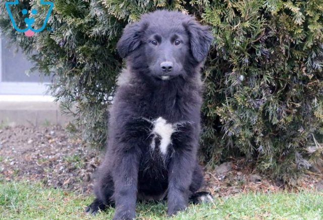 Wishes-Golden-Retriever-Mixed-Breed-Dog