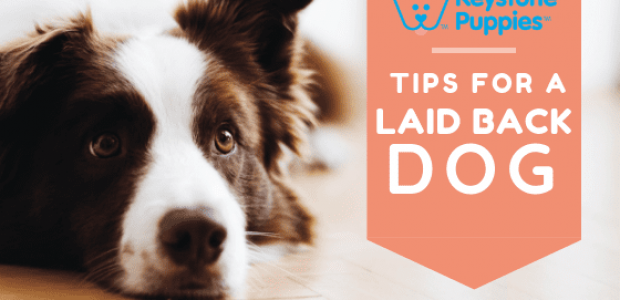 Tips for a More Laid-Back and Well-Adjusted Dog