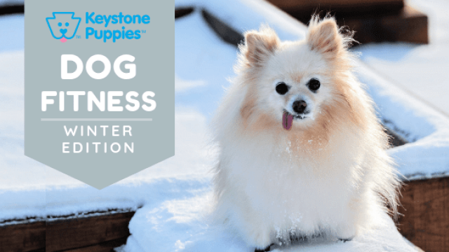 Keep Your Dog in Shape This Winter!