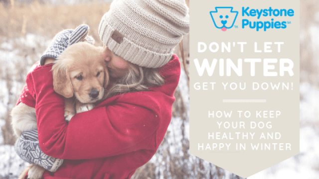 Don't Let Winter Get Your Dog Down!