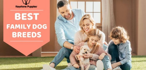 Best Family Dog Breeds