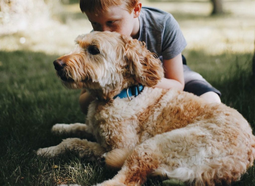Family dog Goldendoodle with little boy