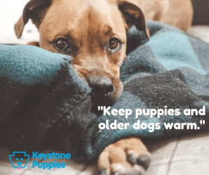 keep-dogs-warm-healthy-responsibly-bred-Pennsylvania