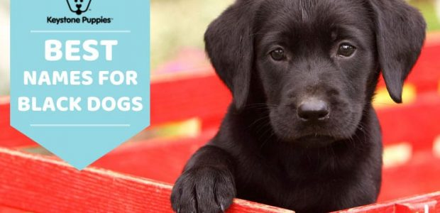 Best Names for Black Dogs