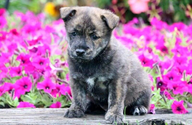 Non-shedding dog breed in flowerbed