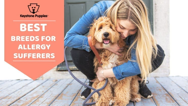 The Differences Between Hypoallergenic Non Shedding Dogs
