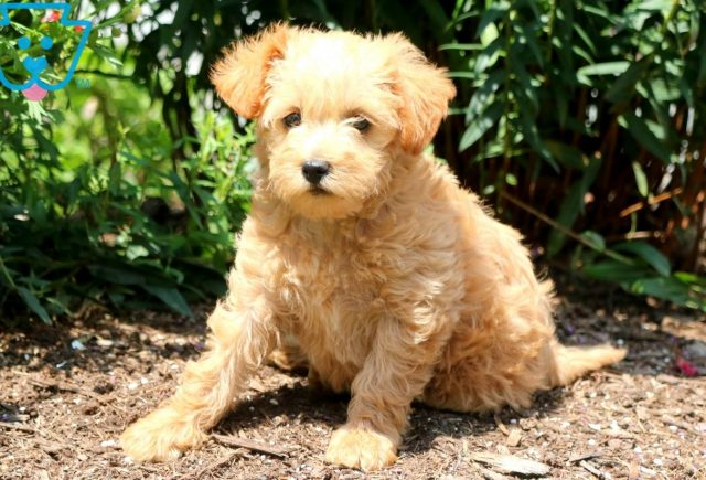 Kelly Schnoodle 1