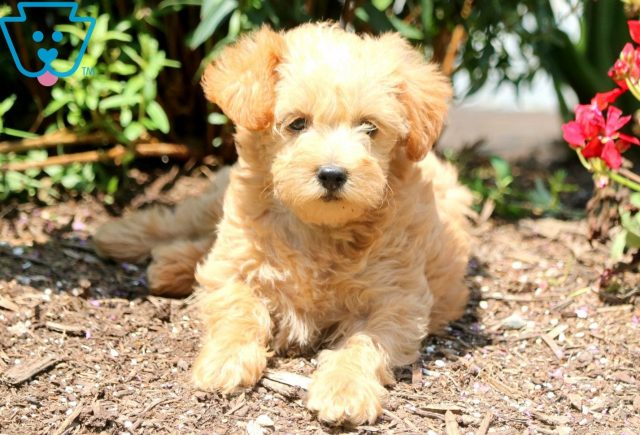 Kelly Schnoodle 2