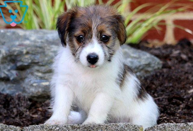 Pooch Jack Russell Mix 3