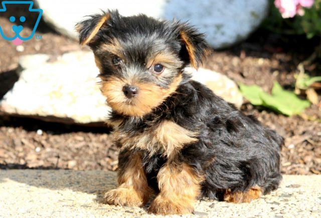 Andy Yorkie 1