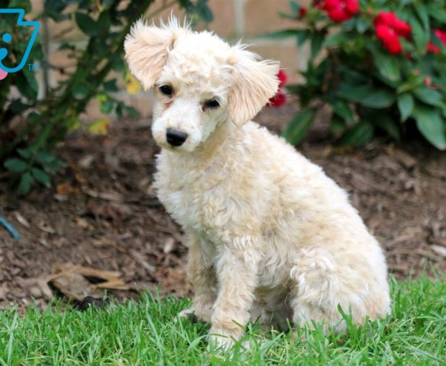 Get A New Puppy Today! View our ADORABLE Newborn Puppies