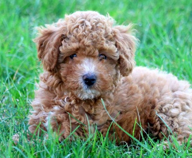 Puppy Finder: Find & Buy a Dog today by using our Petfinder