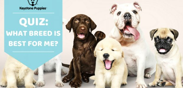 What is the Best Dog Breed for Me? An Interactive Dog Breed Selector