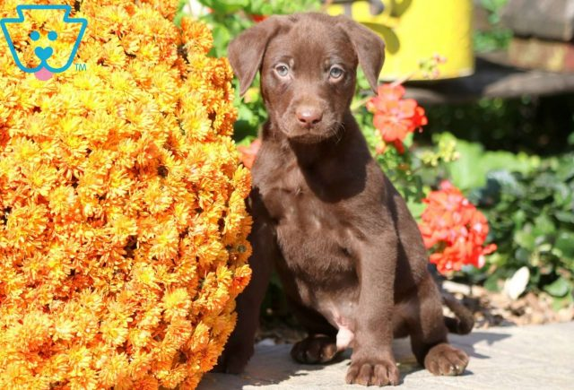 cHIP cHOC lAB 1