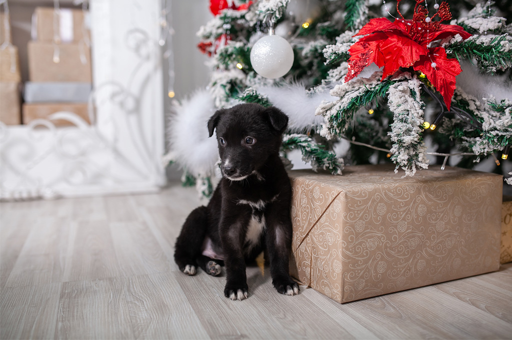 Black puppy sitting by Christmas tree