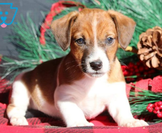 Get A New Puppy Today View Our Adorable Newborn Puppies