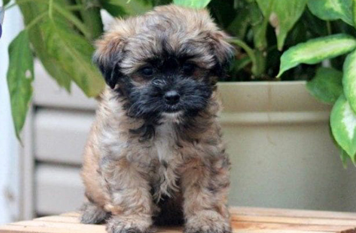 Mixed puppy breed for sale