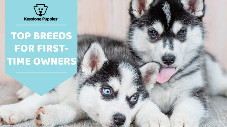 Top breeds for first time dog owners