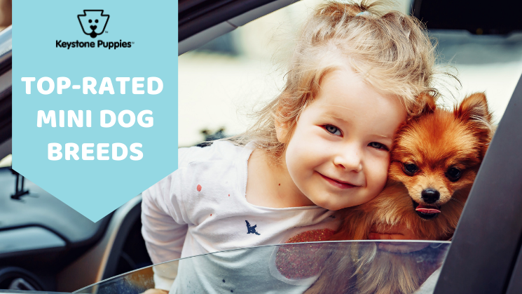 Little girl with Pomeranian dog in car
