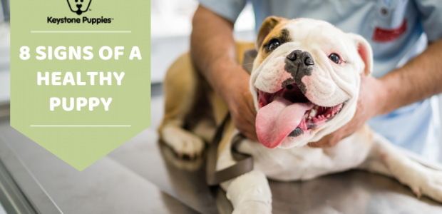 How to Tell if a Puppy is Healthy