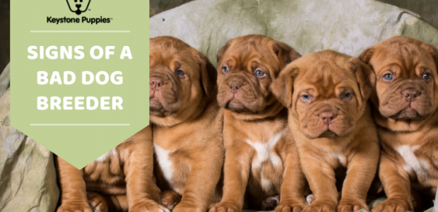 How to Know if a Dog Breeder is Reputable